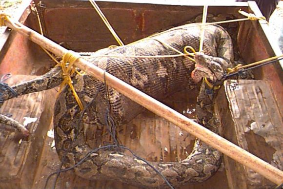 Snake Snack 2